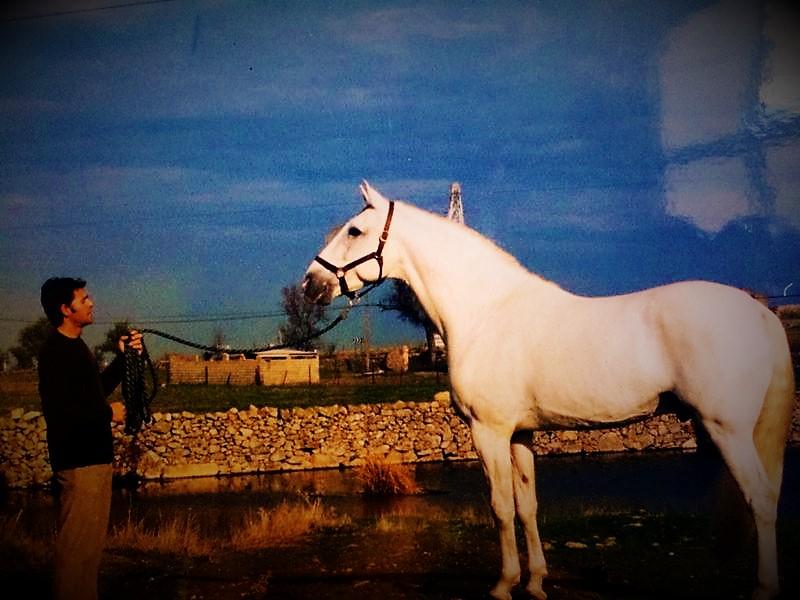 Criador: Explotaciones Agropecuarias Castilla S.A. (Las Corajas – Hierro de la F) TORERO (Rusga II x Desejo) Medalla de Plata – Lisboa ´92