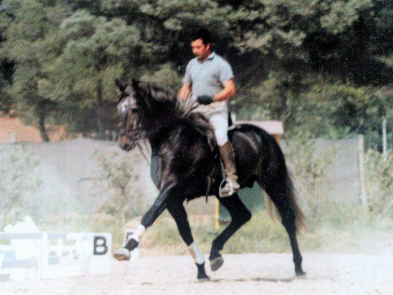 Criador: Arq. Arsenio Raposo Cordeiro JASMIM (Cereja x Novilheiro) Campeón de machos – Lisboa ´92 Medalla de plata – Feria Nacional do Cavalo ´95